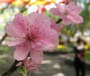 Flora Vietnam