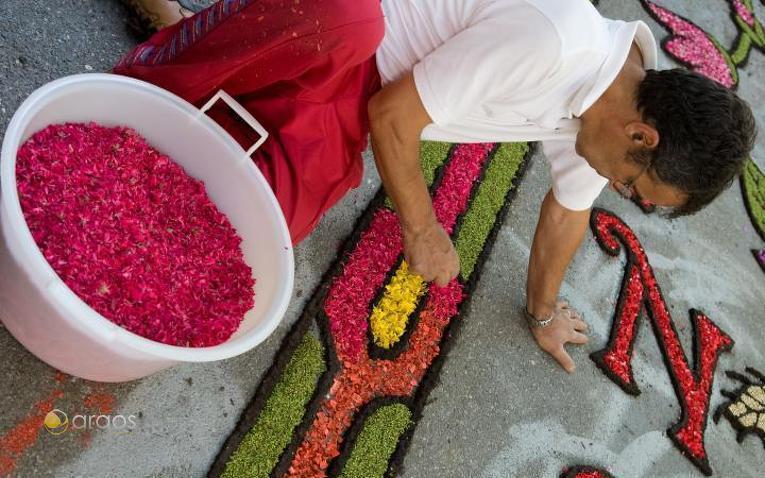 Vorbereitung eines Blumenteppichs in Briatico