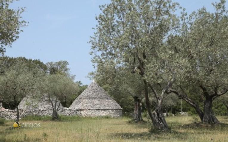 Traditionelle istrische Häuser