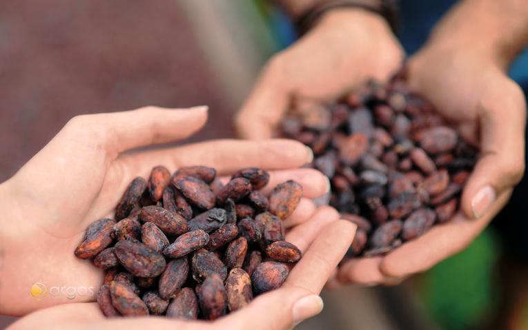 St Lucia Kakaobohnen