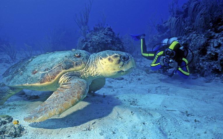 Tauchen mit Riesenschildkröten