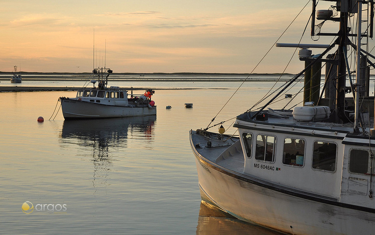 Chatham Fish Pier auf Cape Cod