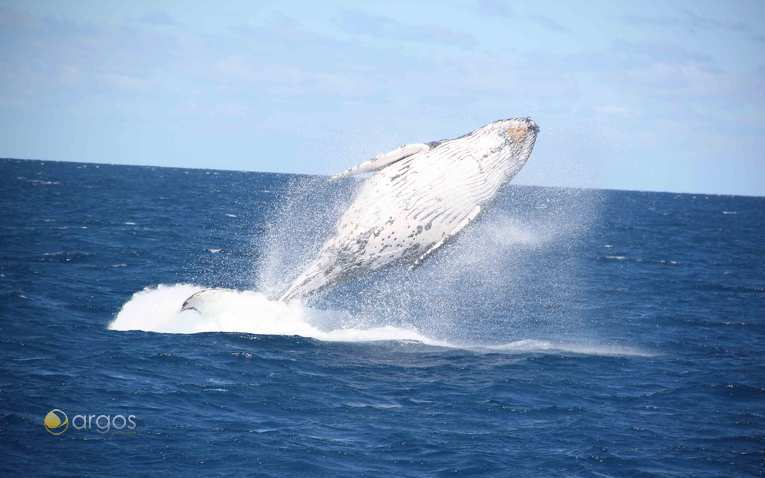 Wale beobachten bei einem Segeltörn in Neukaledonien