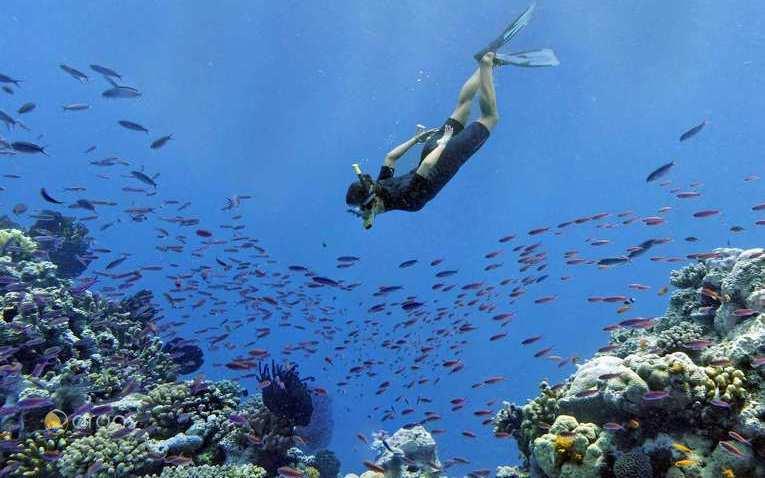 Entdecken Sie die bunte Unterwasserwelt Neukaledoniens
