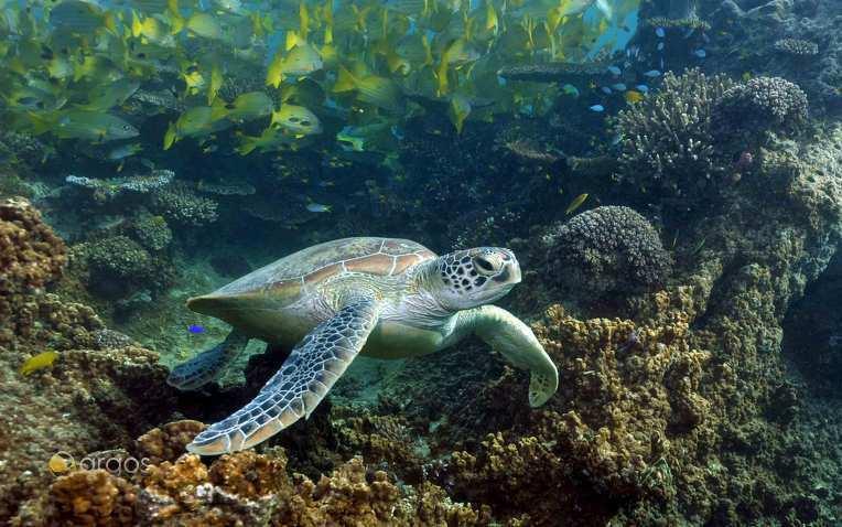 Foto von Neukaledonien