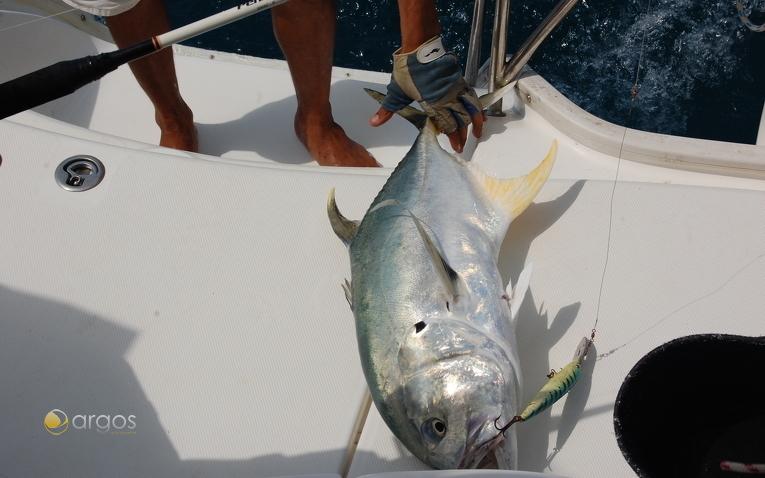 Thunfisch, Belize