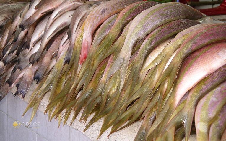 Fischmarkt, Placencia - Belize