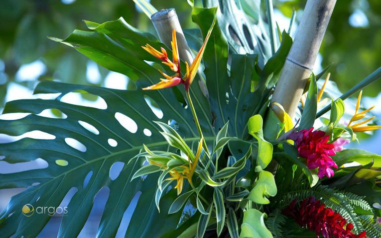 Polynesischer Blütenpracht