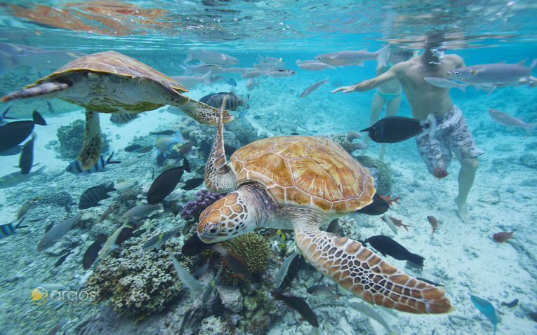 Schildkröten Bora Bora