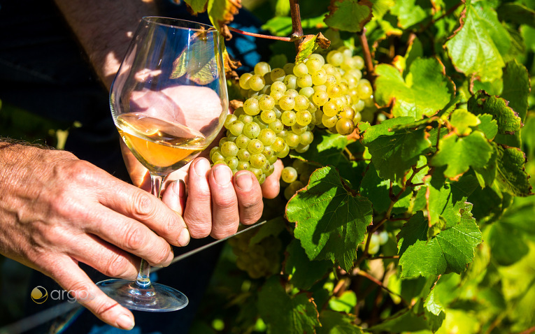 Wein aus Domaine Saint Nicolas