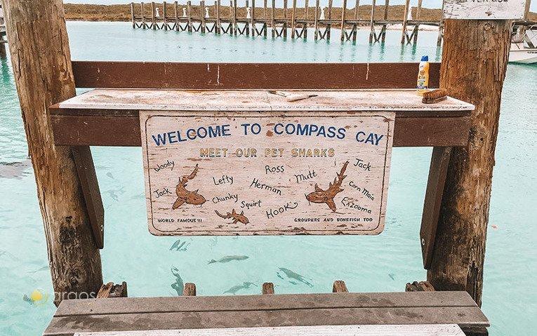Willkommen auf Compass Cay um mit Haien zu schwimmen
