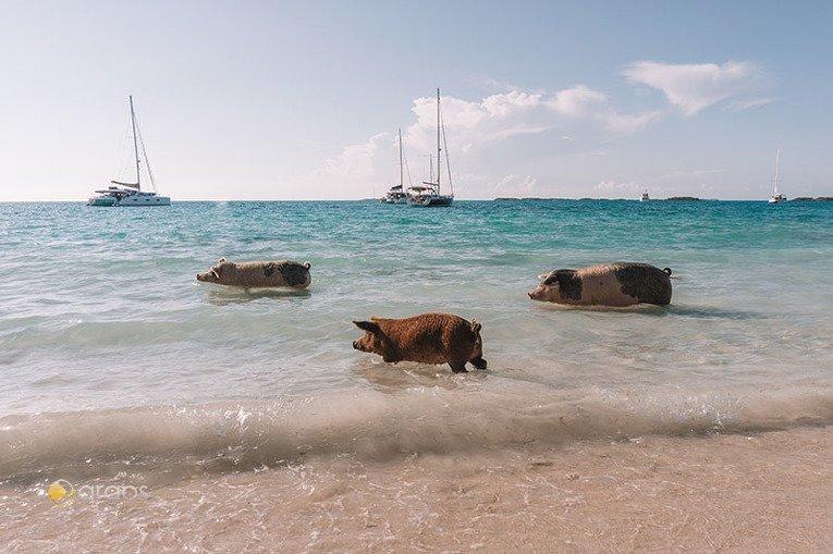 Foto von New Providence und Exuma Cays