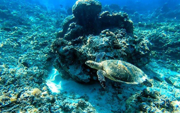 Schildkröten - Unterwasserwelt Bali