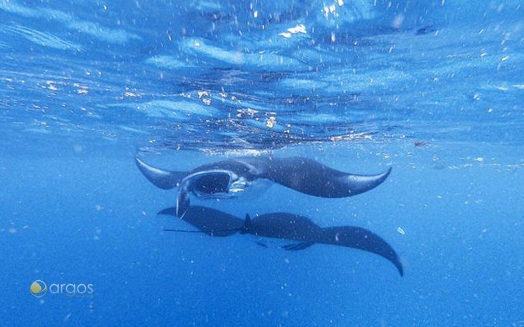 Mantas - Unterwasserwelt Bali